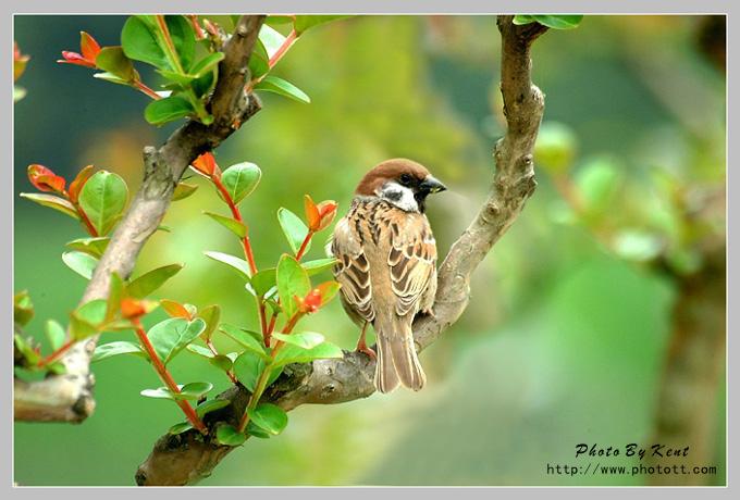 停在树上的鸟简笔画