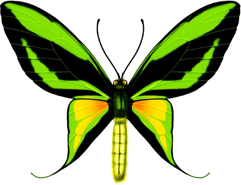 美丽的蝴蝶