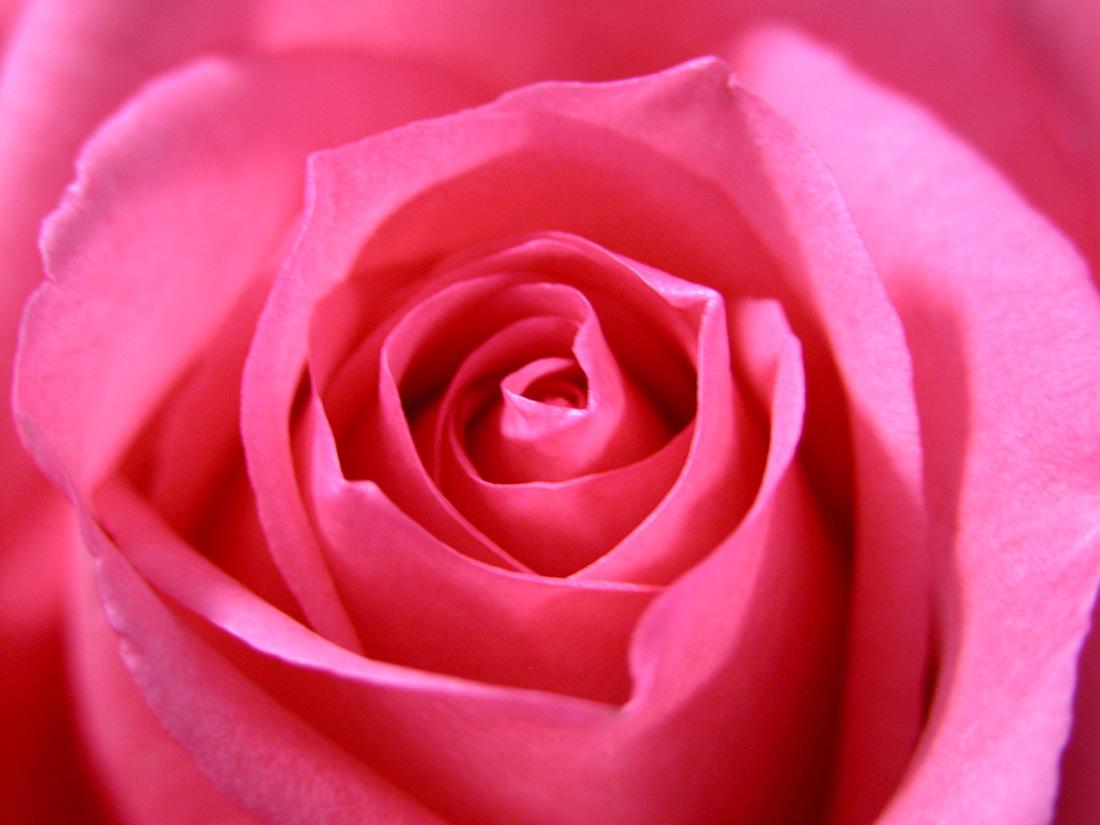 周一新开始,送大家一朵花:)