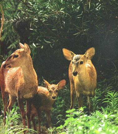 **我国一级保护动物名录[爱护动物的朋