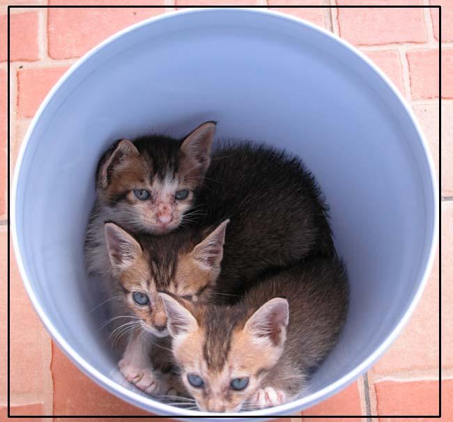 干净的垃圾桶里