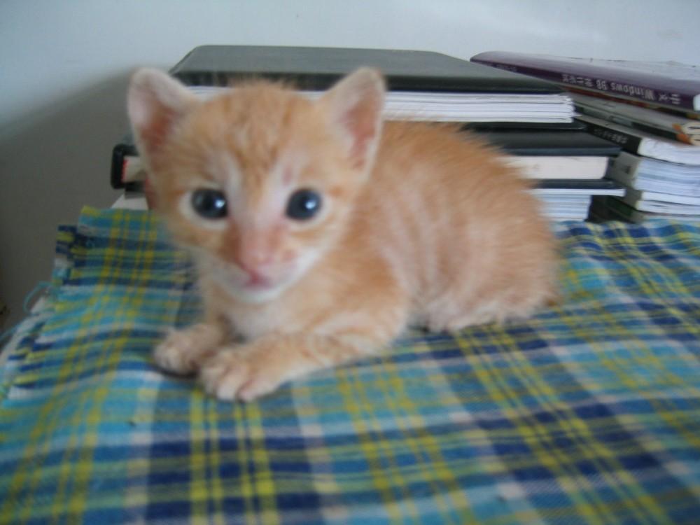 家里新收养的两只猫咪,也粉可爱!   1.