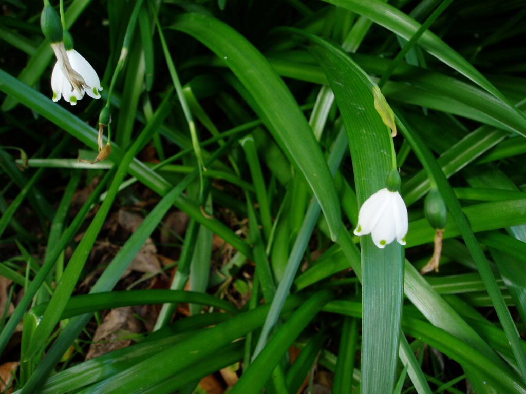 春天来了,贴我家院子里的花花^
