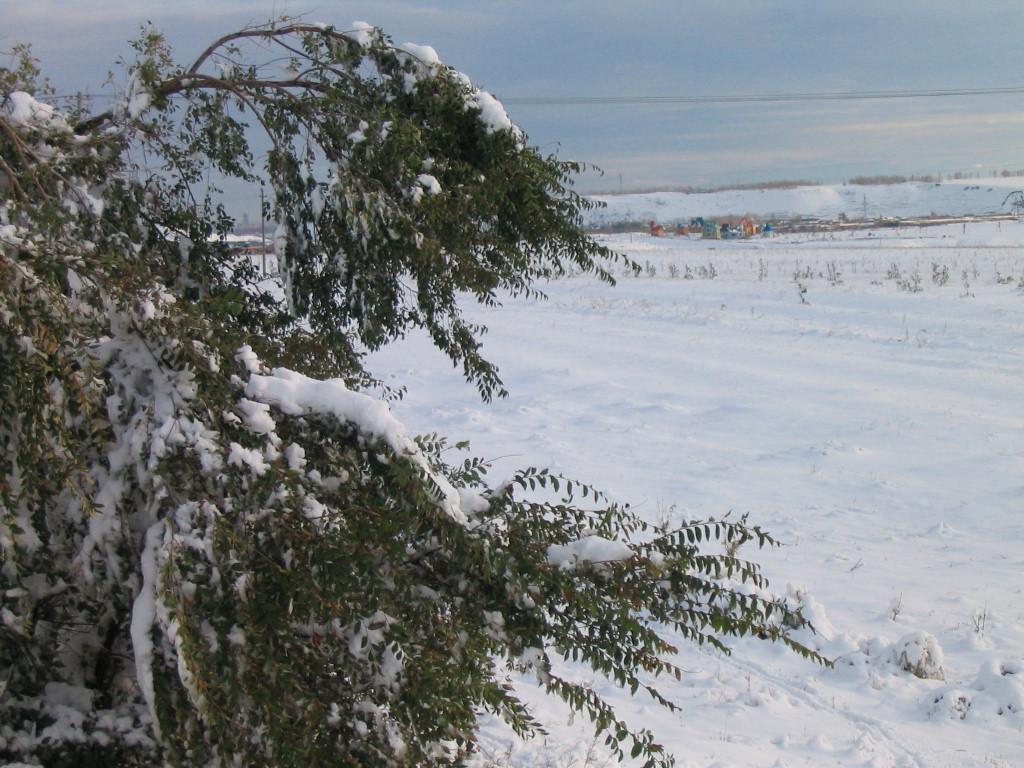 内蒙古海拉尔雪景图片展示