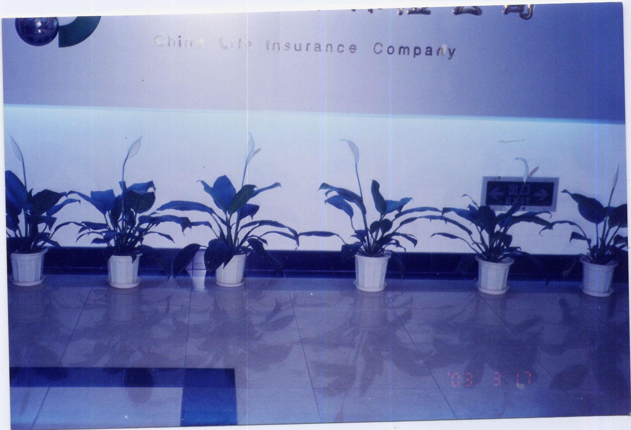 专业绘小型阳台 花园园林绿化cad平面图
