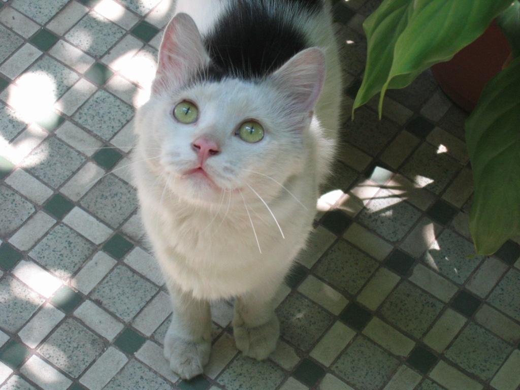 多可爱的一只猫猫就这样莫名其妙不见了!