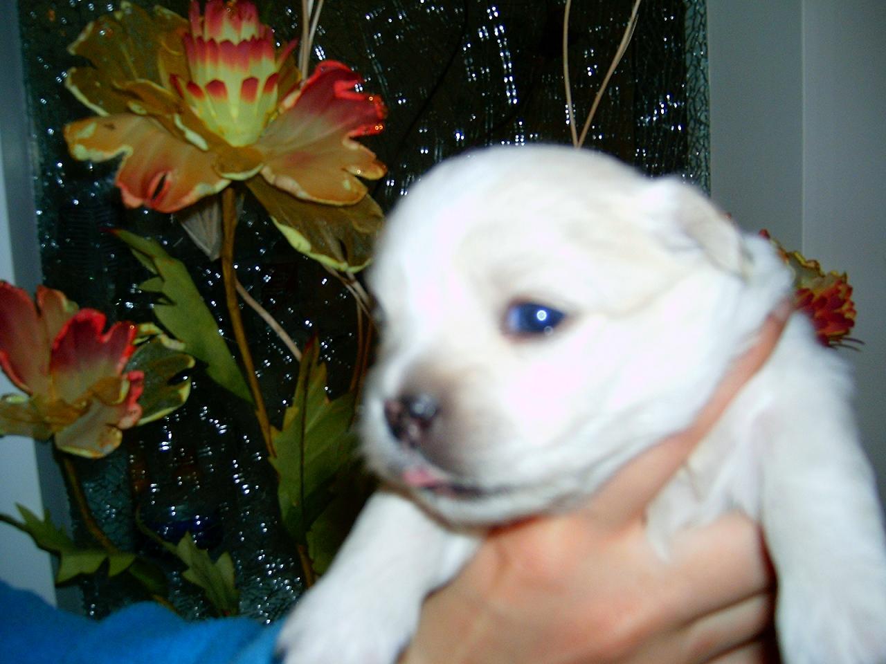 小狗狗睁开眼睛了:)