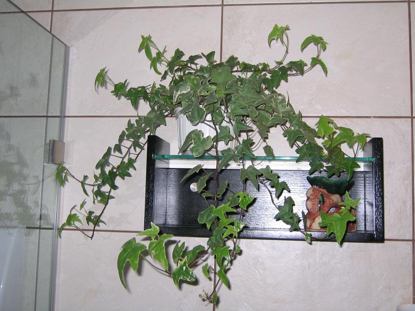 什么植物适合种在卫生间啊,这天气太潮了? - 深