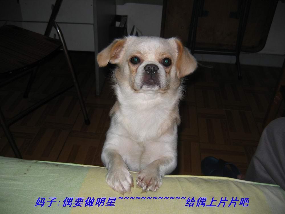 死狗不怕开水烫 - 深圳房地产信息网论坛